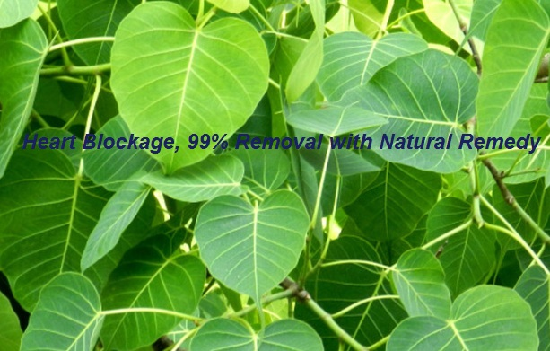 Heart Blockage Removal Naturally by Peepal Leaves – Infodrishti